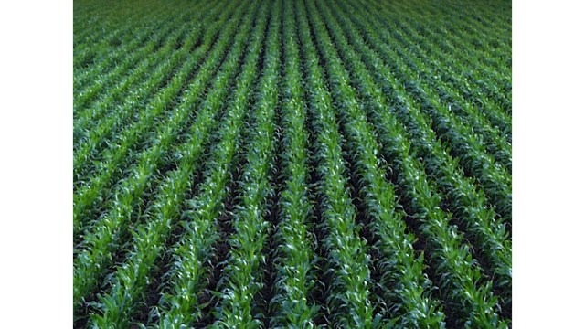 Gov. Edwards proclaims today Agriculture Day in Louisiana