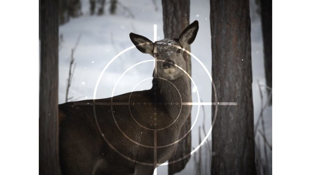 Deer Hunters being cautioned about the use of deer urine lures