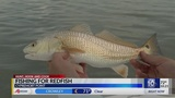 Hunt, Hook & Cook: Catching redfish at Cypremort Point